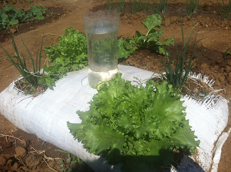 Demonstration Garden in HOPE Humana Palapye - Latest News - HPP Botswana
